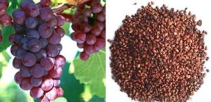 como-hidratar-os-cabelos-usando-oleo-de-semente-de-uva-2